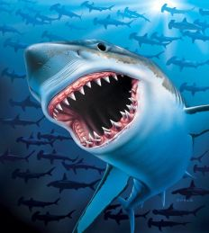 1353 Great White Shark